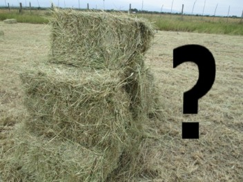 bales-of-hay