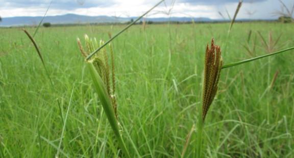 grass-blog-2