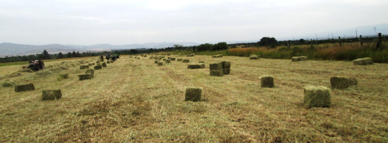 GUEST POST: End Of Hay Baling Season - Lessons Learned