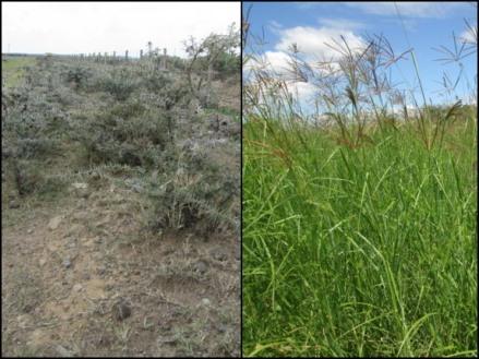 Managed grasslands
