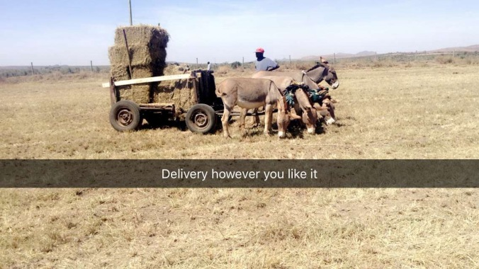 Donkey Delivery