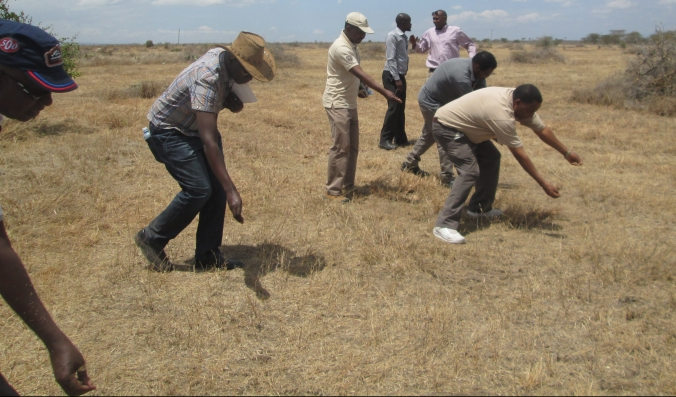 Hay seed dispersal, planting