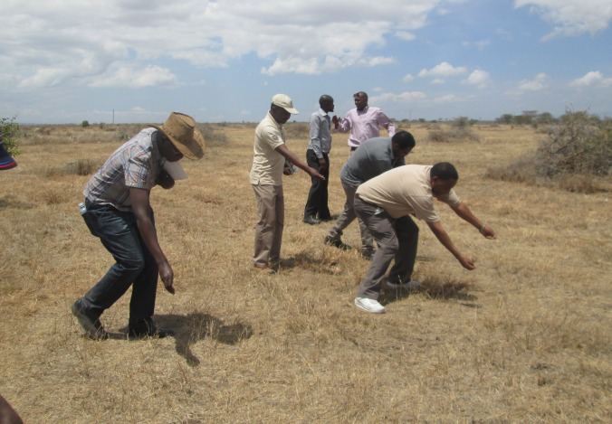Seed dispersal, hay farming